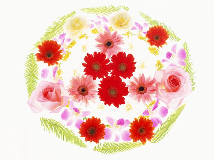 выбрать цветок 1