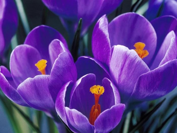 http://photoofcolours.narod.ru/flowers/flowers_2735.jpg