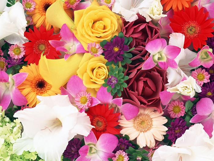 покажите картинки цветов разных цветов театр каждому